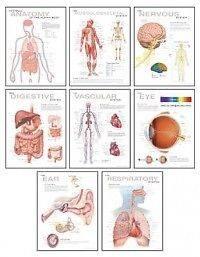 Human Anatomy Chart Pack NEW