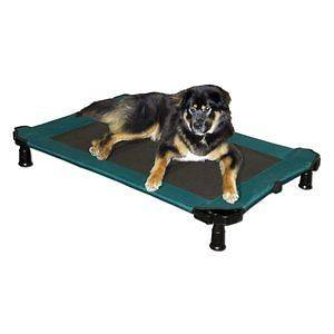 Elevated Pet Cot Dog Cat Bed Large XL Capacity 75 lbs Moss Green NEW