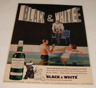 1963 Black+White Scotch ad~ Scottie Dogs, Swimming Pool