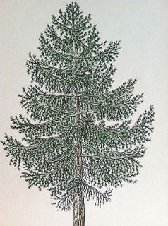 LARCH vintage ANTIQUE botanical TREE PRINT forrest PINE CONE wood