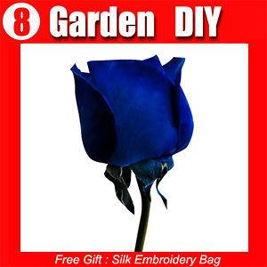 Pack 100+ Flowers Seeds Blue Fairy Rose Seed China Lover Popular
