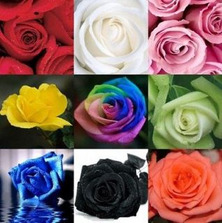 30 Rose Seeds Blue Red Green Pink Purple Black Rainbow Petal Garden