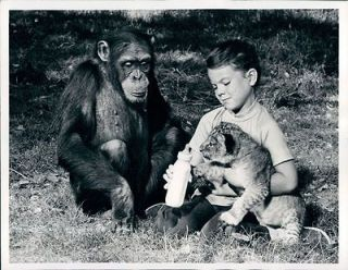 1968 TV Program with Actress Erin Moran Chimp Judy & Lion Cub Wire