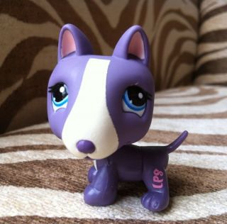 Littlest Pet Shop ~ #2448 RARE Purple BULL TERRIER dog blue eyes VERY