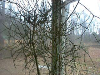 Newly listed PENCIL TREE CUTTINGNO CACTUS NEEDLESUNUSUAL