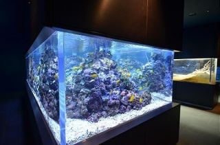 NEW 300 GALLON ACRYLIC AQUARIUM FISH TANK (WE WILL BEAT ANY
