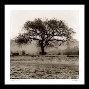 Willow Tree Nature Art Framed Print Alan Blaustein