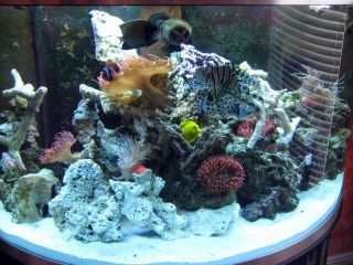 saltwater fish tank aquarium tropical fish anemone live rock tank set