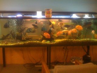 Perfecto 44 gallon pentagon glass aquarium for Pentagon fish tank