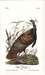 Wild Turkey (Male) JJ Audubon Fine BIRD Book Plate from Limited 1978