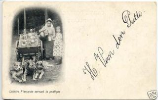 j1195 3 dogs pulling milk cart dog cart postcard from