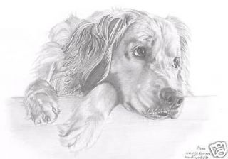 GOLDEN RETRIEVER 1 dog Limited Edition drawing art picture print by UK