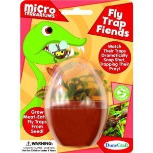 Venus Fly Trap Friends Micro Terrarium Indoor Plant Grow Your Own Seed