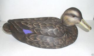 Wooden Magnum Gunning Resting Blackduck Duck Decoy New