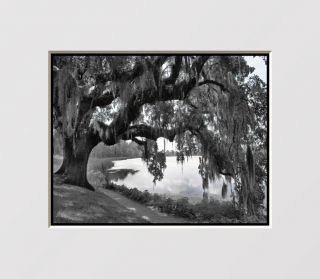 Black White Oak Tree Home Interior Decor Wall Art Matted Picture