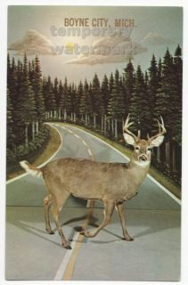 BUCK DEER ~ CALL OF THE WILD MUSEUM DISPLAY~GAYLORD MI~c1960s postcard