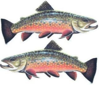 BROOK TROUT 2 fish decals/stickers 6.5 x 2.75