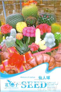 Cactus Seed ★ 10 Mixed Colors Flower Seeds Resistance Dry Lovely