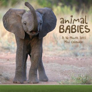 Animal Babies 2013 Mini Wall Calendar