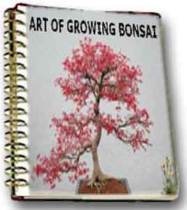 Art Growing Bonsai Grow Zen Garden Tree Care Plant Pot