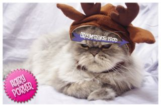 Reindeer Pet Hat for Cat and Dog] Costume / Cap / Christmas