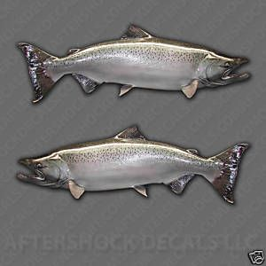 Chinook Salmon Fishing Decal Sticker