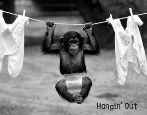 Chimp Baby Vintage Animal Funny Joke Humor Poster S508