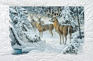 White Tail Deer Family Boxed Christmas Cards