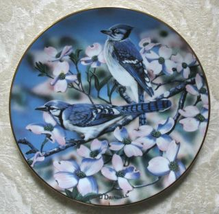 Blue Jays of Spring Bird Danny ODriscoll Plate Favorite American