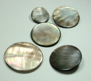 Victorian Large Abalone Shell Buttons with Metal Shanks