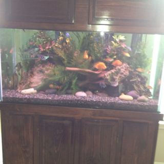 90 gallon fish tank decorations tank saltwater marine for 90 gallon fish tank stand