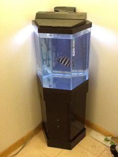 37 gallon glass hexagon fish tank 20 gallon tank plus for 37 gallon fish tank