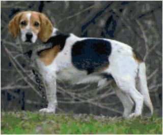 Beagle Dog Counted Cross Stitch Pattern Chart Design