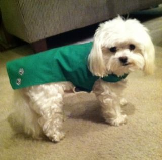 Small Dogs New Pet Puppy Dog Shirt Green St Patricks Day Apparel Cute