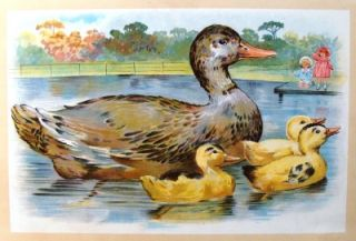 Webers Animals Babies 1934 Duck Ducklings