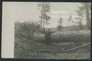 MN Rollins RPPC 1910 A Fallen Giant Man Poses with Uprooted Pine Tree