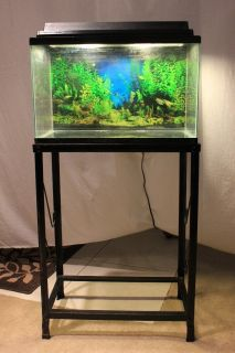 Gallon Plexi Fish Tank with Black Lacquer Stand Canopy and ... 10 Gallon Fish Tank Stand Metal