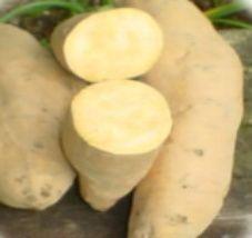 25 SWEET POTATO SLIPS / PLANTS   Nancy Hall   Edible   Organic   FREE