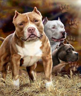 Pit Bulls Super Soft Fleece Throw Blanket Sofa Throw Dog Gift Idea