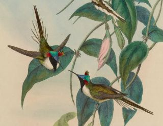 Hummingbirds John Gould 418 Antique Colored Prints Lithographs High