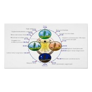 Human Circadian Rhythm Biological Sleep Clock Posters