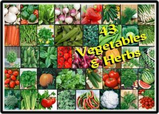 VEGETABLE HERB Garden VARIETY Lot ~Over 5,000 Fresh Seeds ~43
