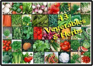 VEGETABLE HERB Garden VARIETY Lot ~Over 5,000 Fresh Seeds ~43