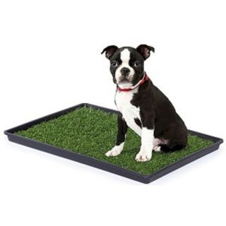 Small Indoor Dog Potty for House Training A Puppy or Older Dogs