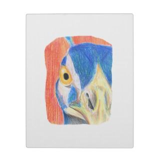 Peacock head colored pencil drawing sketch plaques