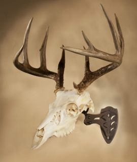 SKULL HOOKER EUROPEAN SKULL MOUNT BRACKET ROBUST BROWN WHITETAIL DEER