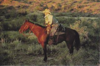 Quarter Horse Postcard Cowboy on Horse Bob Moorhouse Photograph AQHA