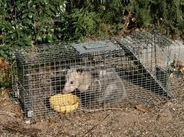 Humane Live Animal Trap Cage for Cats Dogs Possum Racoon Mouse