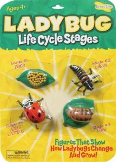 Insect Lore Ladybug Life Cycle Stages   Set of 4 Figures   Biology