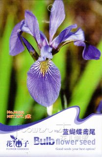 Pack 5 Flower Seeds Blue Butterfly Iris Popular Garden Plant